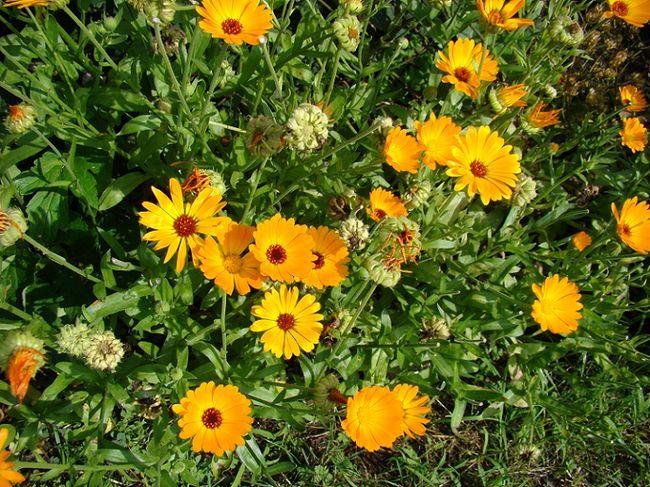 фото ноготков цветов