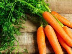 Лучшие сорта моркови для Подмосковья